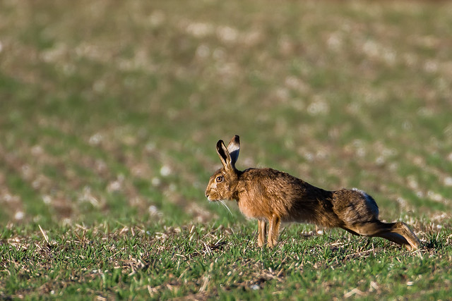 New Hare Alley260221_103.jpg