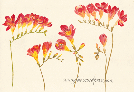 red freesia with watercolour