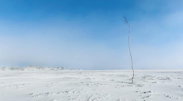 empty landscape with birch