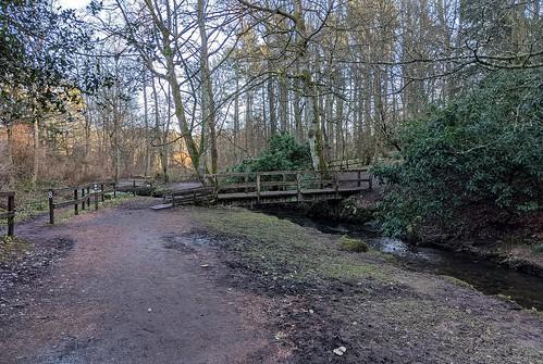 Balbirnie Park, Fife, Scotland, woodland