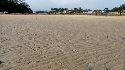 Living sandy shores of Lazarus Island, Feb 2021