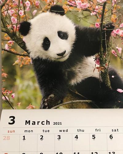 3月がやってきた。 地球は毎日少しずつ動いて、太陽のまわりを1周してきたんだなー。 心機一転、また歩き出す。