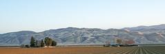 Working field in Taft, CA