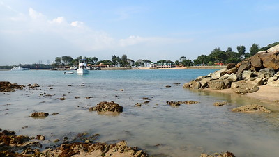 Living shores of Lazarus Island, Feb 2021