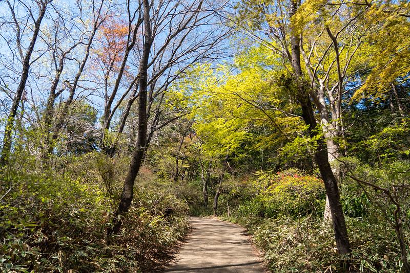 新緑の天覧山の登山口