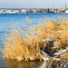 2021-02-12-lake-walk-2