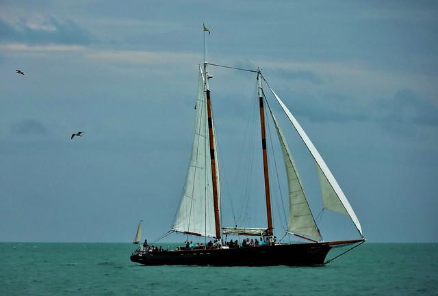 Tall Ships & Gulls