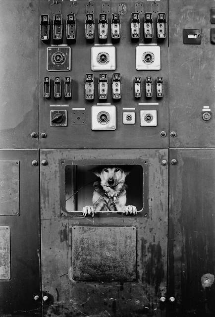 Perro dentro de máquina