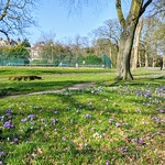 Early Spring colour and kids illegally in a tennis court at Haslam Park