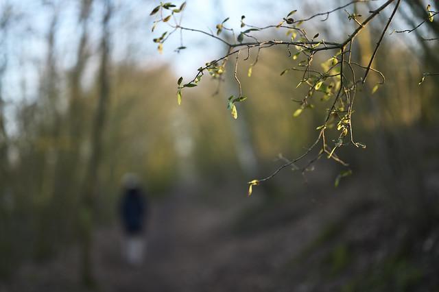 spring is here @ walking path