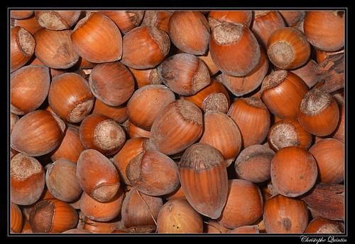 Noisettes (Corylus avellana)