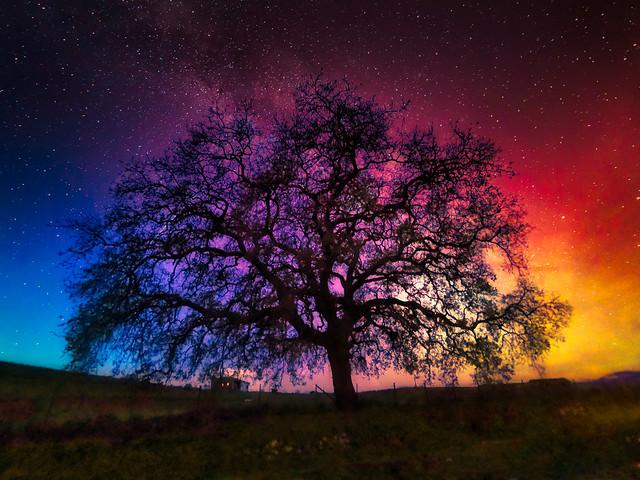 Oak on a starry night