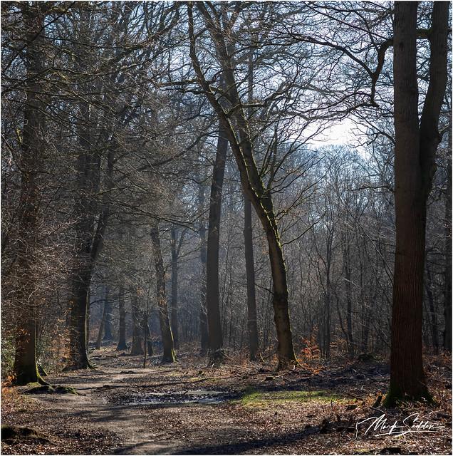 Early Spring Walk-1-Edit-Edit-Edit.jpg