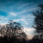 28. Veebruar 2021 - 17:27 - Sunset for crows