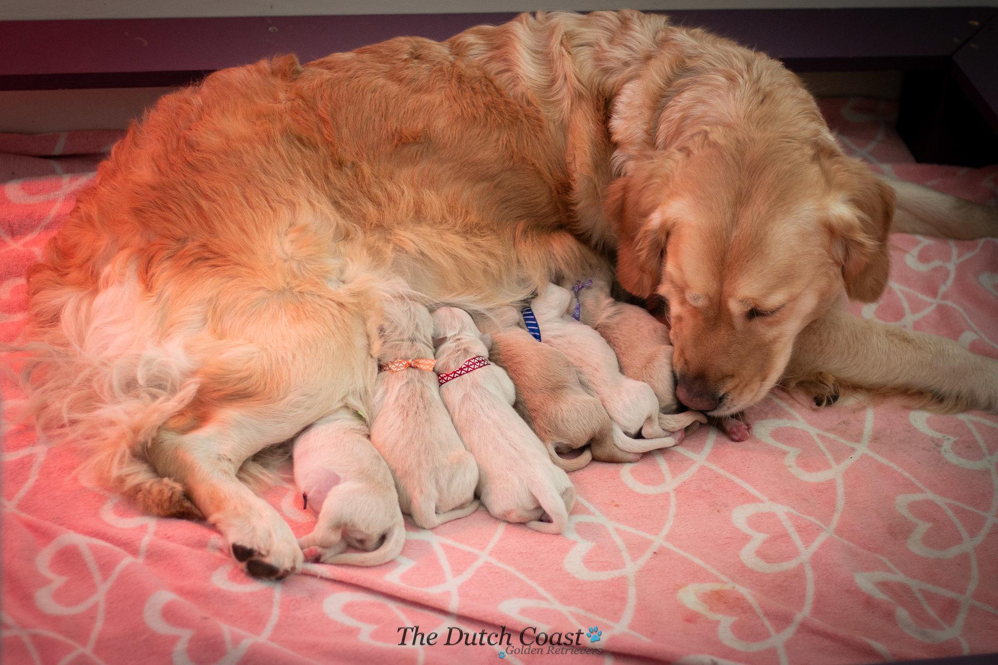 Alice & pups dag 1