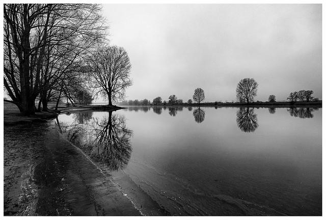Trees along the riverside
