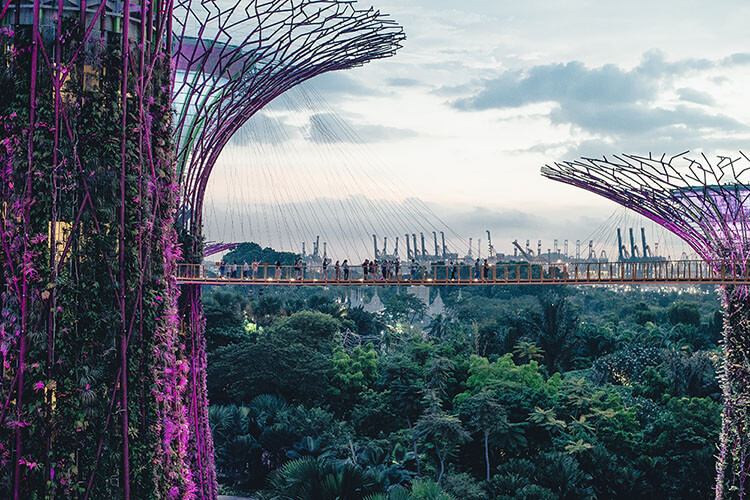 Supertree Grove and OCBC Skyway