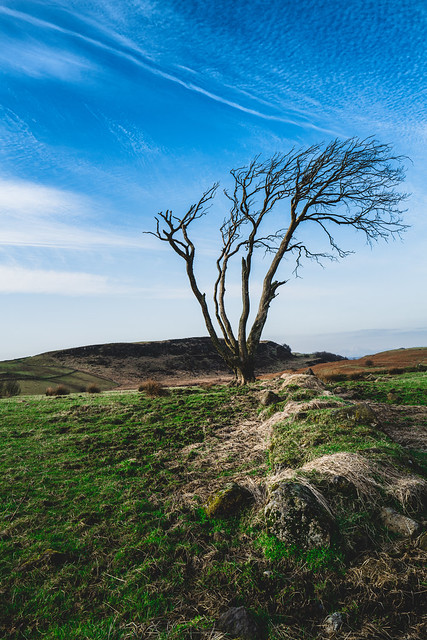Loan Tree.