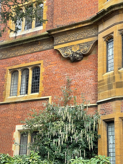 Cambridge 1 March