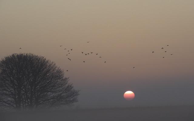 Misty Sunrise II #appicoftheweek