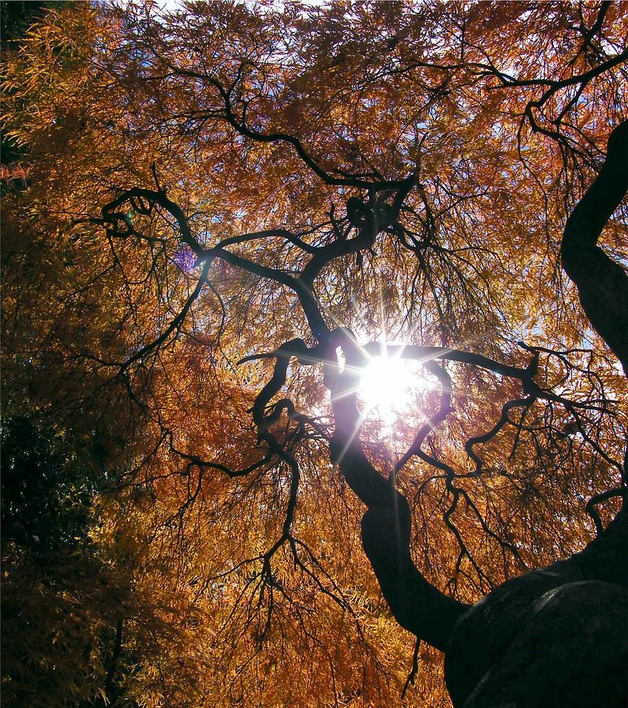 Sun in the Tree