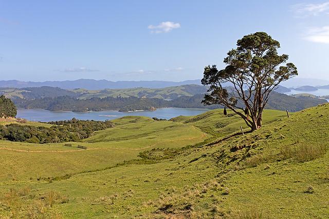 Nouvelle-Zélande, en direction de Coromandel... / New Zealand, on road to Coromandel...