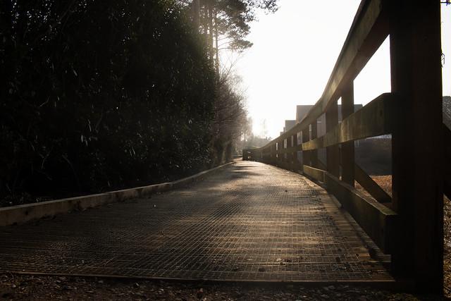 Sunlit Path [Explored 🌟]