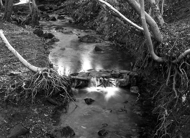 Stanley Burn Woods, Mamiya 645E, 80mm lens, Ilford Pan F+ in HC110