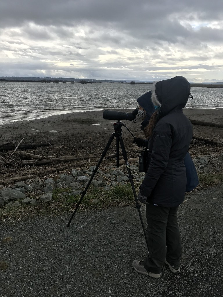 Flock to the Delta: Birdwatching and More Along the Skagit Delta
