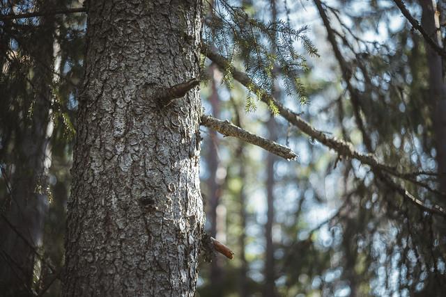 Småvirvlande skog.