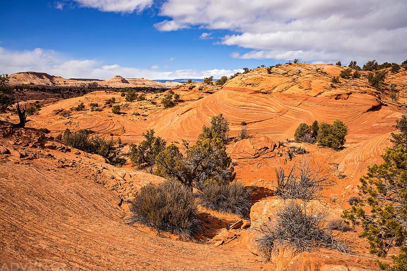 King Bench Landscape