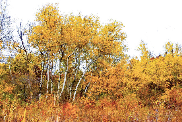 Fall colors from many moons ago