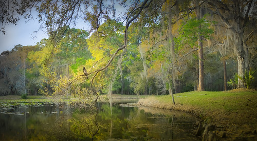 landscape bird trees sunset river serenity inspirational goldenhour nikond850 nature beauty naturesbeauty cormorant