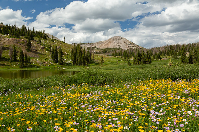Flowery Wyoming