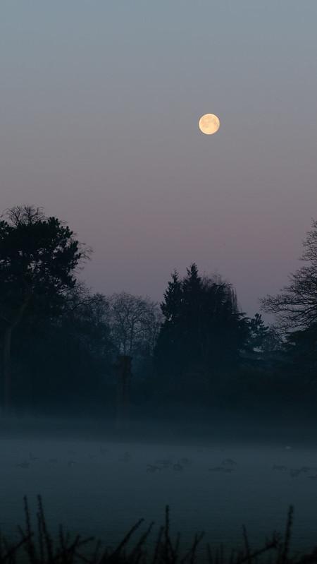Full moon setting, misty morning, West Park