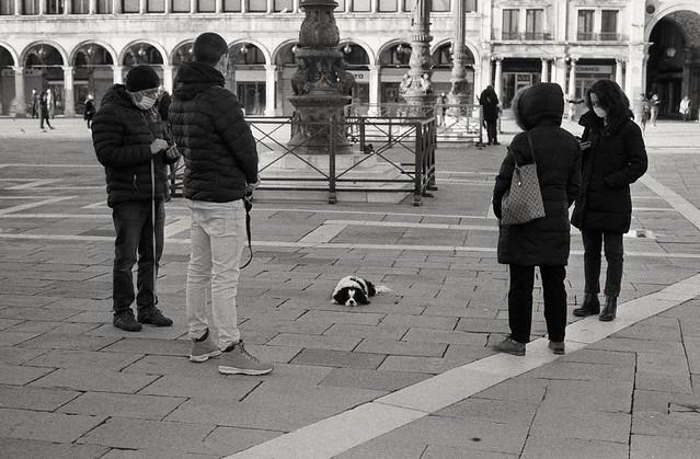 Sad dog (film)