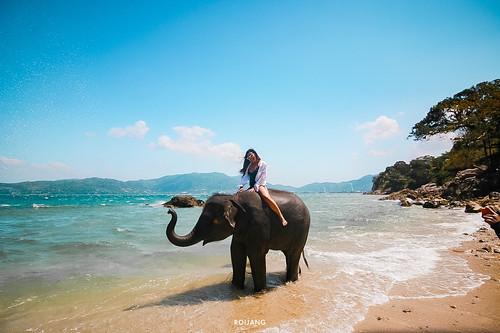 รีวิว Phuket elephant on the Beach