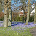 Spring colour at Ashton Park, Preston
