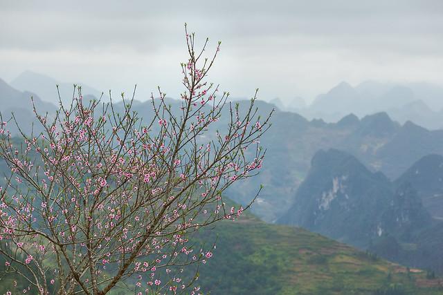 _Y2U6650.0221.Lũng Táo.Đồng Văn.Hà Giang