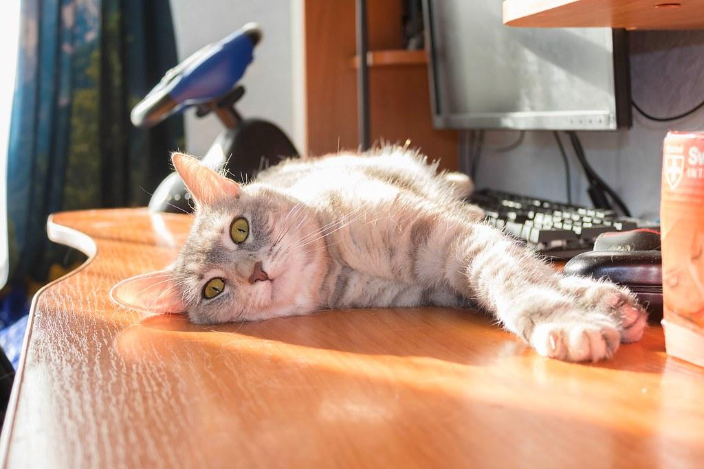 Taking a sunbath