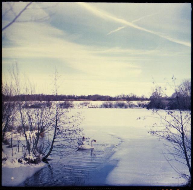 Schwanensee im Eis