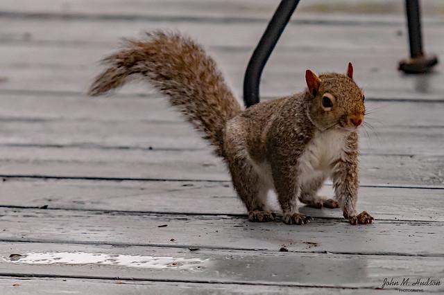 2021.02.28.7455.D850 Squirrel at Full Stop