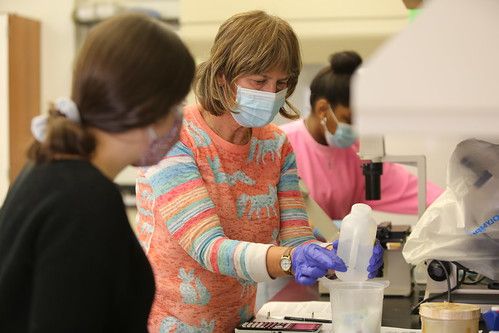 Biology professor Patty Zwollo provides her students with hands-on experience in her Immunology Laboratory.