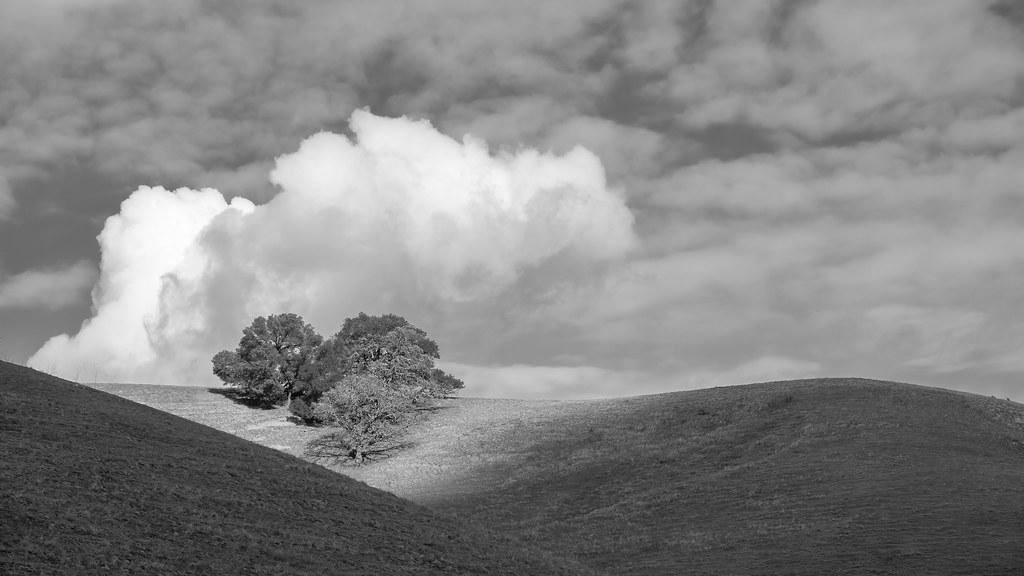 Storm Cloud Over Oak