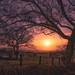 "<p><a href=""https://www.flickr.com/people/143458341@N05/"">xDigital-Dreamsx</a> posted a photo:</p>  <p><a href=""https://www.flickr.com/photos/143458341@N05/50997092487/"" title=""Gormyre sunset""><img src=""https://live.staticflickr.com/65535/50997092487_03237a640e_m.jpg"" width=""240"" height=""139"" alt=""Gormyre sunset"" /></a></p>"