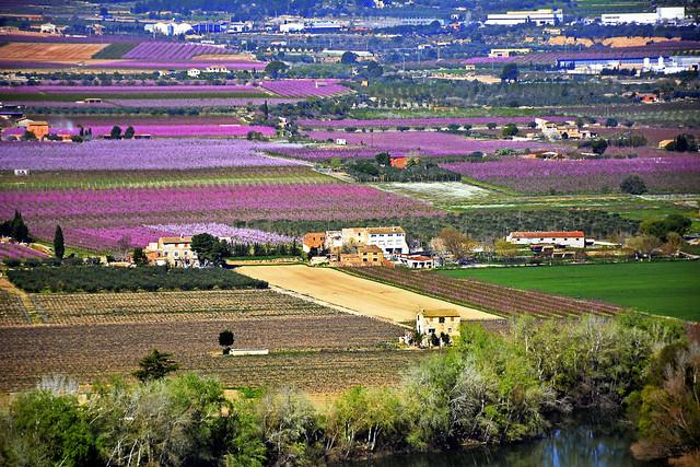 Tivissa, Castellet de Banyoles, fruita dolça, Ribera d'Ebre