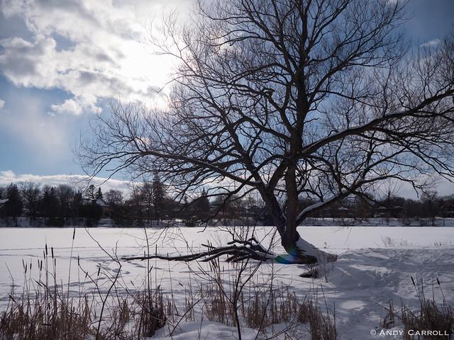 Otonabee River, tree