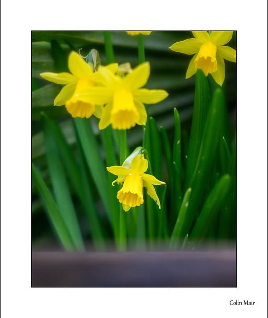 Springtime - (JUpiter 9, 85mm, f2.8) - 2021-02-28th