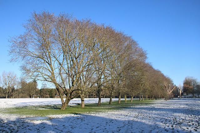 Roxbourne Park In The Snow