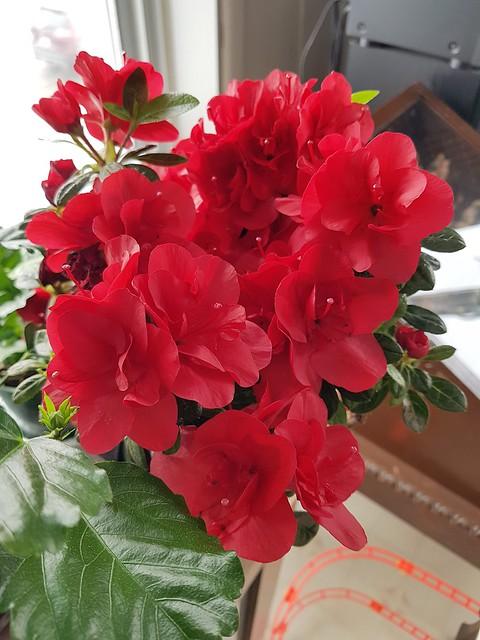 Un Jolie Bouquet De Fleurs. 2021 02 25 10:48.23